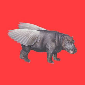 flying hippo